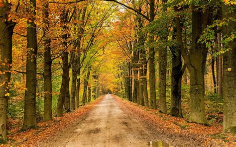 Tree In Woods Wallpaper by Landscape Nature Tree Forest Woods Autumn Path Road