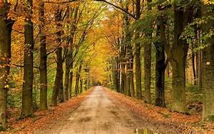 Landscape, Nature, Tree, Forest, Woods, Autumn, Path, Road