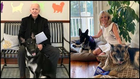 First Dogs Champ And Major Biden Officially Move Into ...
