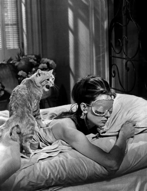 diamants sur canapé musique autour des chats les chats du cinéma