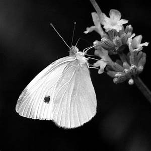26 best PICTURES OF FLOWERS IN BLACK & WHITE images on ...
