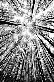 Black and White Tree Mural