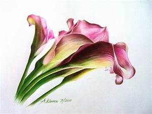 Calla Lilies - Annely Karron Art and Design