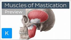 Muscles Of Mastication  Preview