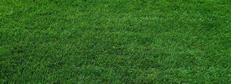 Rasen Vertikutieren Sommer by Vertikutieren Im Sommer Den Rasen Vertikutieren Rasen