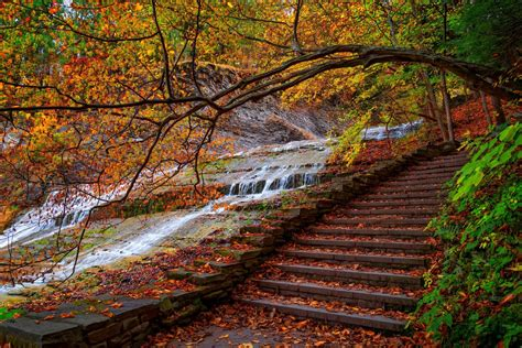 nature water forest park steps trees leaves colorful