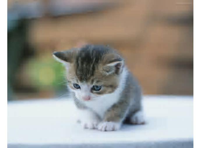 Unduh 96+  Gambar Kucing Editan Lucu Terbaik