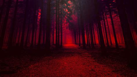 forest with trees in effect hd aesthetic