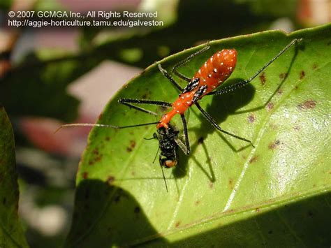 Beneficial Insects In The Garden