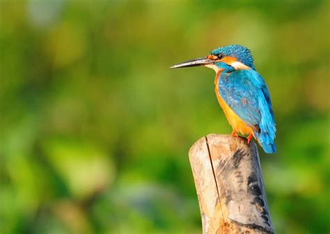 bird spots in southern india kumarakom bird sanctuary kerala the day trip to kuttanad