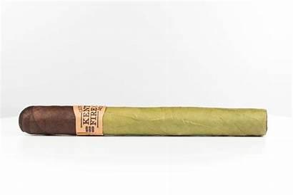 Cigar Swamp Thang Cured Kentucky Fire Drew
