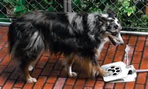 inventors create water fountains  dogs  portable