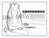 Groundhog Coloring Pages Ground Groundhogs Activities Fun Activity Happy Climb Tree Squirrel Bark Trees sketch template