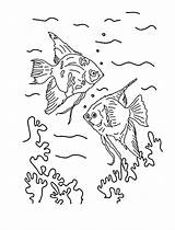 Angelfish Drawing Angel Fish Coloring Getdrawings sketch template