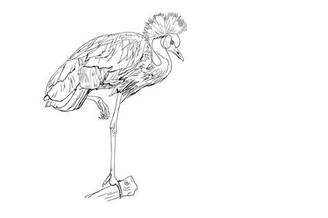 blue stork template joomla 3 stock graphic the african crowned crane bird 187 logotire