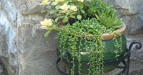 cascading succulent plants i love the cascading succulents garden ideas pinterest planters gardens and plants