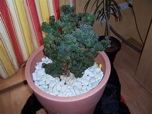 Pilze Im Garten Entfernen : gelber pilz in erde von kaktus frag mutti forum ~ Lizthompson.info Haus und Dekorationen