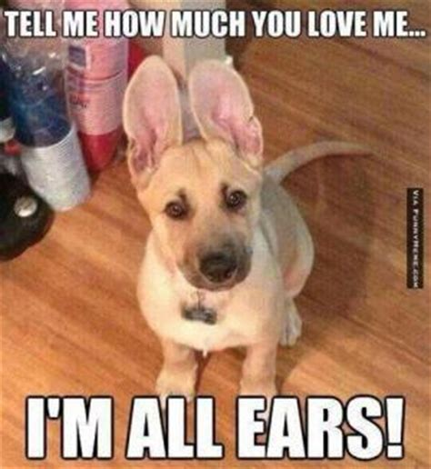 Much Dog Meme - funny big ear jokes kappit