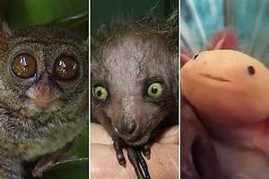 Real Weird Cute Animals | www.pixshark.com - Images ...