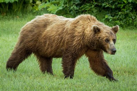 Amazing Canada Wildlife - Barrhead Travel Blog