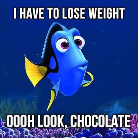 Chocolate Memes - 143 best images about chocolate memes on pinterest funny quotes about chocolate meme and