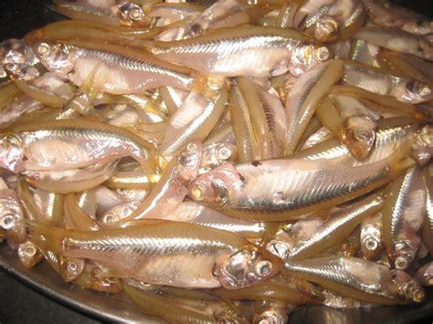 singhi fish recipe