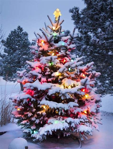 11 november 2014 christmas tree