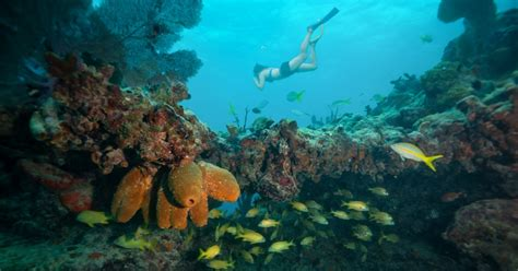 snorkeling tours  key west  reviews