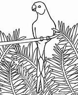 Coloring Parrot Printable Realistic Parrots Cool2bkids Birds Eagle Colorear Adult Bird Bald Dibujos Nature sketch template