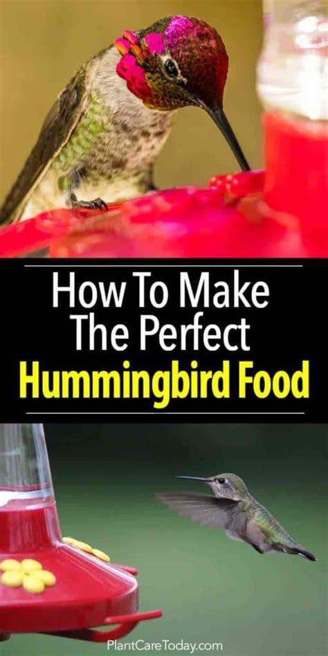 hummingbird food bird recipe perfect feeders feeder humming hummingbirds nectar homemade plantcaretoday dye birds garden water sugar diy plants birdhouse