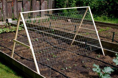 best cucumber trellis design garden update the sacred bee s blog