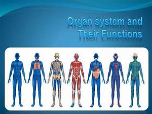 Diagram Muscular System Function