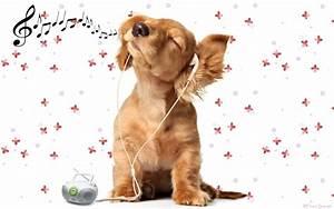 Download Music Animals Wallpaper 1920x1200 | Wallpoper #358955