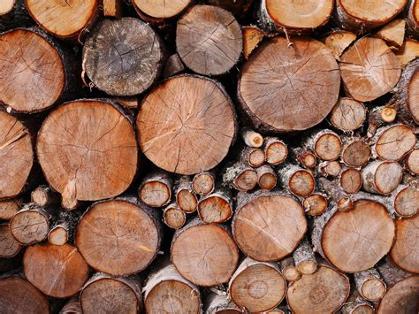 10 Top Tips For Control Of Firewood Pests