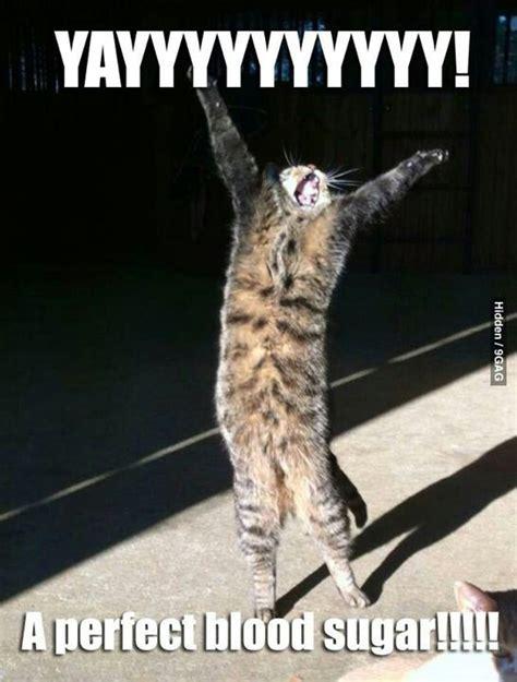 Diabetes Cat Meme - 104 best images about diabetic humor on pinterest type 1 diabetes low blood sugar and humor
