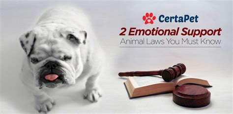 2 Ironclad Emotional Support Animal Laws {must Read}