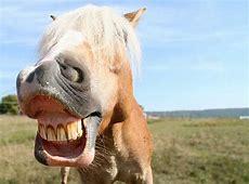 Pferdesprache so deutest du dein Pferd richtig ZooRoyal