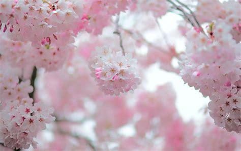 Spring Bloom, Bokeh Widescreen Wallpaper
