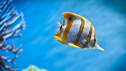 Wallpapers Marine Underwater Cool Ocean Gold Backgrounds