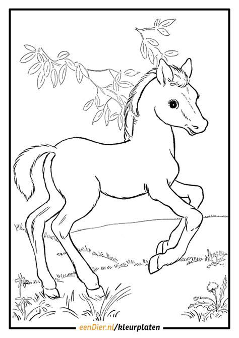 Springend Paard Kleurplaat by Een Kleurplaat Een Paard