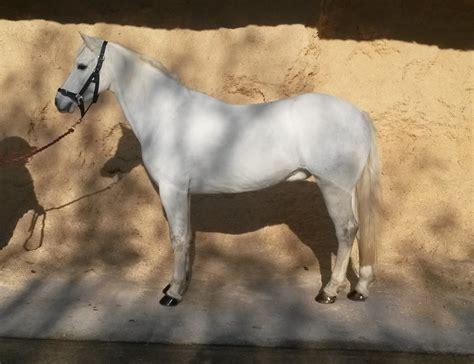 ponies horses equestrian centre