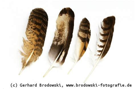 alles ueber voegel vogel nester augen eier fuesse federn