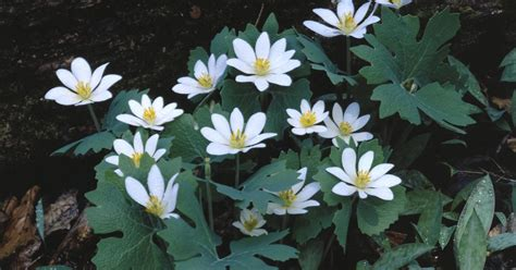 perennial plants for shady areas ehow uk