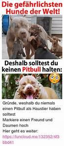 Einen Grünen Daumen Haben : pitbull meme die gefahrlichsten hunde der welt deshalb solltest du keinen pitbull halten ~ Markanthonyermac.com Haus und Dekorationen