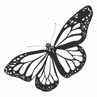 Butterfly Mariposa Monarch Transparent Silueta Monarca Icon