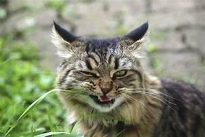Gemüse Für Katzen : giftige und ungiftige pflanzen f r katzen mein sch ner ~ Watch28wear.com Haus und Dekorationen