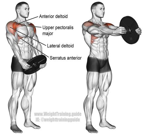 exercises front shoulder exercise deltoid anterior workouts trapezius raise plate serratus muscle muscles workout delts instructions middle
