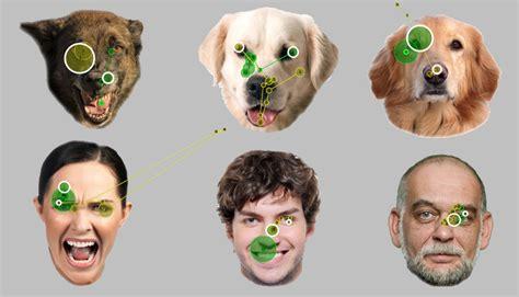 ecco   cani recepiscono la mimica facciale wired