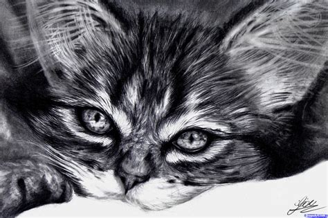 draw  realistic kitten cute kitten step  step