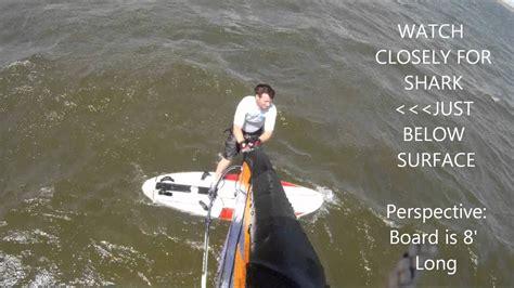 bull shark passing  windsurfer  canadian hole  avon